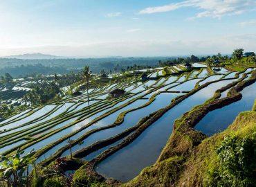 Jatiluwih Rice Terrace | Ubud VW Tour